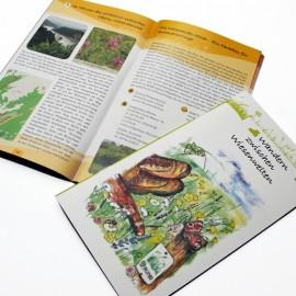 Titelillustration der Wiesen-Wanderbroschüre des BUND
